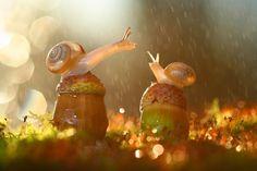 Slakjes in de regen