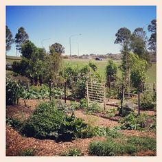 Barrack Heights Community Garden