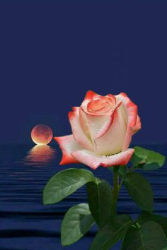 By Artist Unknown. Happy Birthday Song Youtube, Birthday Songs, Moon Rise, Sabbats, Cross Stitch Rose, Beautiful Roses, Beautiful Landscapes, Art Pictures, Good Night