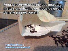 mettez des clous de girofle dans la farine pour éloigner les insectes