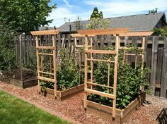 Simple design for holding raspberry canes up. There is garden wire in between the two trellis. Raspberry Canes, Growing Raspberries, Angeles, Cheap Pergola, Metal Pergola, Pergola Patio, Garden Trellis, Diy Trellis, Layout