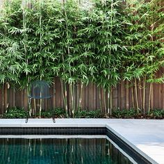 7 Amazing Cool Tips: Cute Backyard Garden Ideas beautiful backyard garden inspiration.Urban Backyard Garden How To Build. Backyard Pool Landscaping, Swimming Pools Backyard, Garden Pool, Landscaping Ideas, Pool Fence, Tropical Backyard, Tropical Gardens, Acreage Landscaping, Swimming Pool Tiles