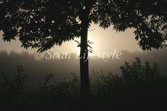 Stillness force https://www.facebook.com/sran.lifestyle/