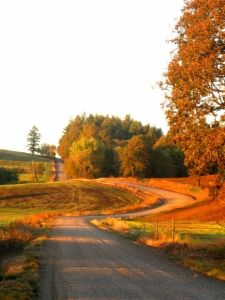 road, path, trees, dirt, curve, way, walkway, country, field, rough, grass, brushes, Oregon, sunset, autumn, fall, scenic, nature
