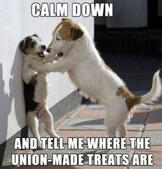 Browse Labor 411's list of union-made pet products and help support good union jobs