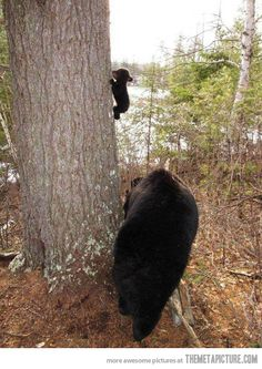 Baby Bear's First Climbing Lesson