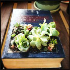 Encyclopedia Succulent Planter