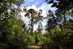 Korowai tree house - Papua, Indonesia