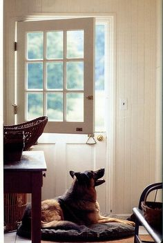 GSD love from Flickr by GIGI Interior Design