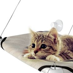 Do you want to give the cats more perching space without adding more furniture, do you want to give them someplace to lay in the sun and check everything going on outside, then you can decided on our kitty cot cat perch. The size: 45.5 x 30cm/17.7 x 11.7inch (L x W).Our cat window perch is easy to set up and it is sturdy, mounts to Windows with heavy duty suction cups, window cat perch is a great place for her to look outside, she can watch the outside world while resting peacefully. Cat...