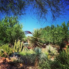 Blue skies and green trails after the weekend storms. View from Desert Discovery Loop Trail #azmonsoon