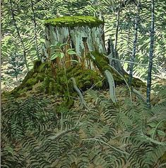 Stump and Ferns - Neil Welliver