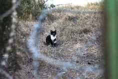 Little mustache kitty behind fence and razor wire - Tel Aviv Industrial Yard Mustache Cat
