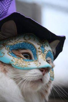 venice Carnival cat: Petit Cabinet de Curiosites