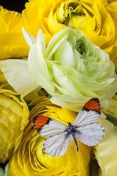 Ranunculus And Butterfly, Garry Gay
