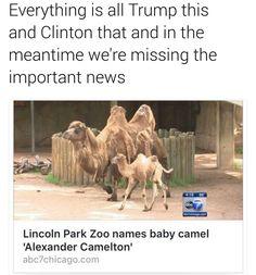 Alexander Camelton
