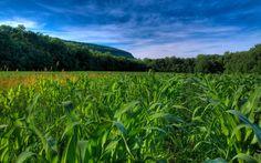 fondos para fotos campos de maiz - Buscar con Google