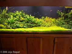 2006 AGA Aquascaping Contest - Entry #73