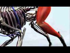 Informational Video: Alaskan Malamute