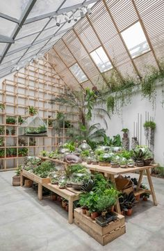 Gallery of Tropical Forest / Tayone Design Studio - 21