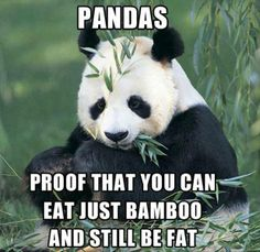 Pandas. Proof you can eat just bamboo and still get fat!