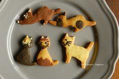slow down. SOPHIA: 餅乾。優雅的貓咪