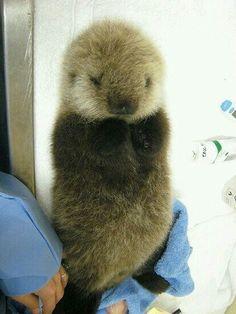 Ahhh I want to pet it