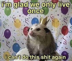 Desu Desu, Depression Memes, I Cant Do This, Opossum, Quality Memes, Fb Memes, Humor, Stupid Memes, Mood Pics