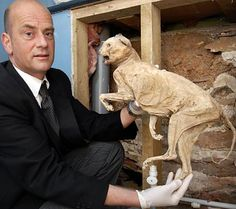 A 400 year old cat mummy found within the walls of a Devon home. Put there to ward off witches and evil spirits.