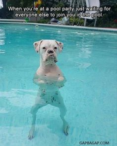 Funny Meme About Pool Party ft. Funny Dog