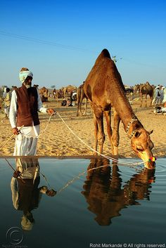Pushkar, a thirsty camel, a shephard....some calculus, algebra, and a symmetry. What comes to your mind first?