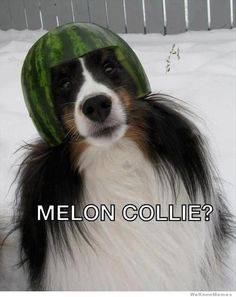 melon-collie? Haha this looks like a Rider fan pooch!