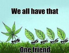 #cannabis #weed #wiet www.spliffseeds.nl  Hello Friends..