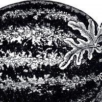 Free Public Domain Watermelon Image!
