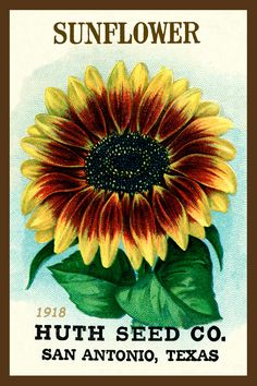 Sunflower Seed Packet 1918 in a set of 4-4x6 quilt blocks by American Quilt Blocks. Ferry Seed Packet 1889 in a set of 4-4x6 quilt blocks by American Quilt Blocks. Vintage image printed on cotton. Ready to sew.  Single 4x6 block $4.95. Set of 4 blocks with pattern $17.95.