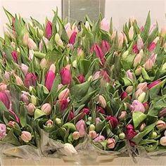 Tulips Pink pastel Mix