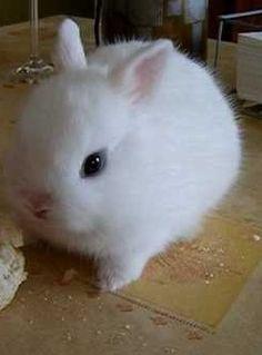 Quiero un conejin así!!
