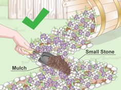 The beauty of gardening is that you can get flowers to look like something else. One trend that is quickly gaining popularity is the spilled flower pot. It looks like a knocked-over flower pot with flowers spilling out of it. The spill...