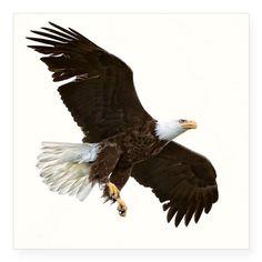 Amazing Bald Eagle Sticker