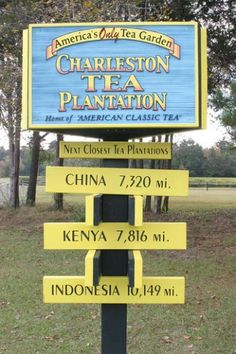 The Charleston Tea Plantation is the home of the ONLY tea grown in America! It's awesome btw :) and it's in the Charleston, SC area!
