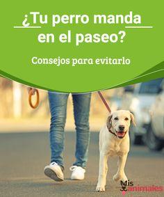 ¿Tu perro manda en el paseo? Consejos para evitarlo ¿Cuando vais de paseo es tu perro quien parece haberte sacado a pasear? Cambia eso siguiendo nuestros consejos plasmados en este artículo. #paseo #perro #mandar #consejos