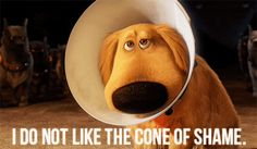 This Mom Came Up With a Brilliant Way Of Decorating Her Dog's Cone Of Shame