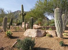 another xeriscape example