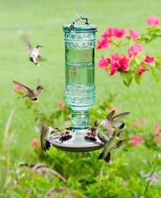 For better prices on Perky-Pet Antique Bottle Glass Hummingbird Feeder, talk to Woodie at Garden Goods Direct. Shop our selection of Perky-Pet Antique Bottle Glass Hummingbird Feeder online today! Glass Hummingbird Feeders, Hummingbird Flowers, Hummingbird Garden, Hummingbird Food, Homemade Hummingbird Feeder, Antique Glass Bottles, Green Glass Bottles, Wild Bird Feeders, Humming Bird Feeders