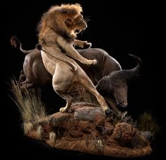 Lion and Cape Buffalo – Pose – Animal Artistry Hunting and taxidermy fighting scene Wildlife Paintings, Wildlife Art, Animal Sketches, Animal Drawings, Lion Pictures, Le Roi Lion, Most Beautiful Animals, Applis Photo, Lion Art