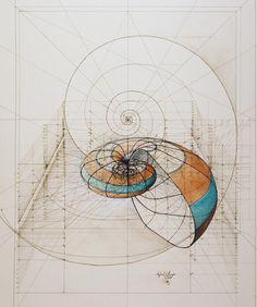 Nautilus by Rafael Araujo