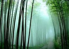 Chinese forest - Fog