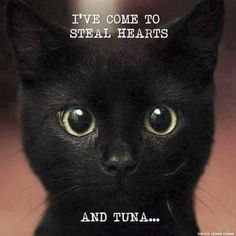 Are you looking for really funny black cat memes? Look no further, we've gathered funny black cat memes just for you to share on your social media accounts