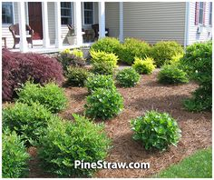 Tips, tricks, including resource beneficial to acquiring the most effective outcome as well as creating the max perusal of Basic Front Yard Landscaping Organic Gardening, Gardening Tips, Gardening Supplies, Pergola Pictures, Backyard Landscaping, Landscaping Ideas, Backyard Ideas, Pine Straw Landscaping, Gardens