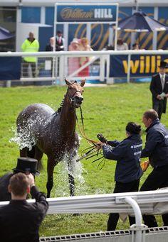 Boisdale's 2012 Epsom Derby - horse racing Derby Horse Race, Horse Racing, Epsom Derby, Horses, Animals, Animales, Animaux, Animal, Animais